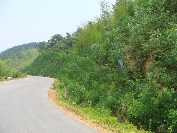 浙江龙泉山风景区道路边坡
